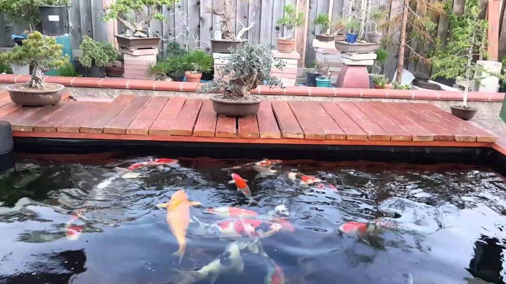 Top 10 địa chỉ thiết kế hồ cá koi trọn gói uy tín chất lượng tại Tphcm